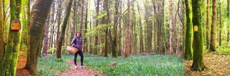 Belleek woods in Ballina Co. Mayo