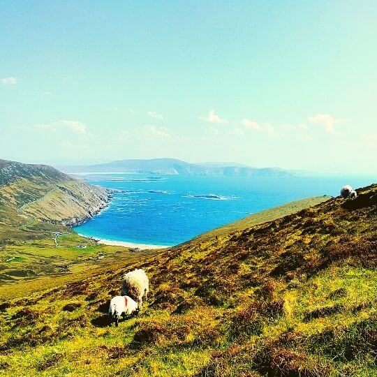 Guided Irish tours and day trips in Mayo and Sligo
